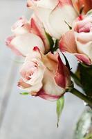 Schöne Rosen foto