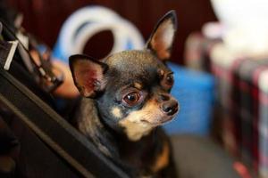 Hund im Korb foto