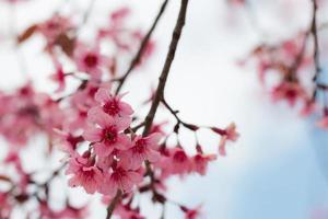 Nahaufnahme Zweig der fröhlichen Blüte. foto
