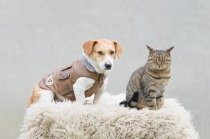 Katze und Hund foto