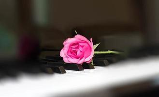 rosa Rose auf einer Klaviertaste