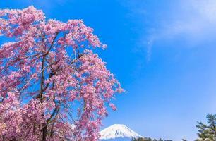 Mount Fuji und weinende Kirschblüte foto