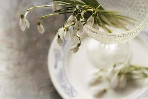 Dekorationskarte. Schneeglöckchen Blumen auf Teller. foto
