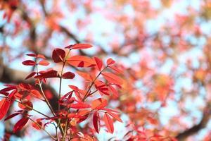 Schönheit in der Natur foto