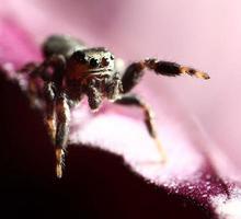 Spinnenpullover