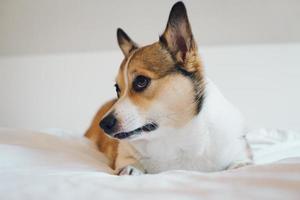 Hund fleht foto