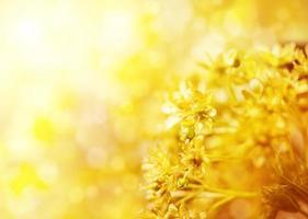 gelbe Blumen foto