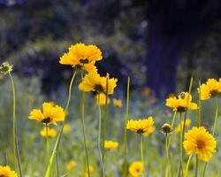 gelbe Wildblumen, die in einem Feld wachsen foto