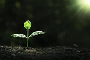 Pflanzenwachstum auf dem Boden foto