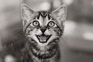 Kätzchen in einem Käfig miaut foto
