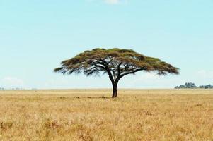 der Baum foto