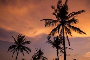Palmen zur Sonnenuntergangszeit.