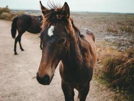 braunes Pferd auf grünem Gras