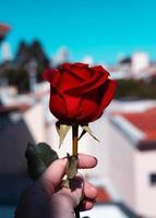 Person, die eine Rose in einer Stadt hält foto
