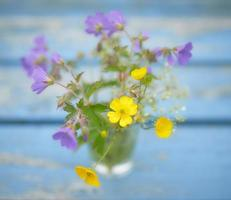 gelbe und lila Blüten