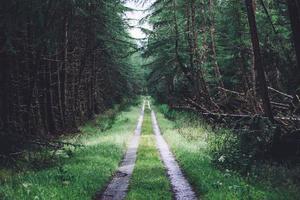 Grasstraße zwischen Waldbäumen