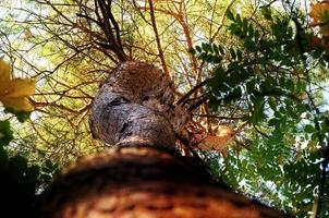 Herbstbaum mit niedrigem Winkel