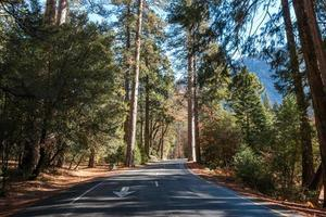Straße zwischen Bäumen