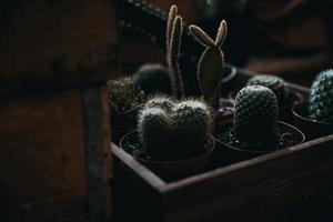 grüne Kaktuspflanzen foto