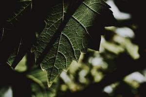 Nahaufnahme des grünen Blattes
