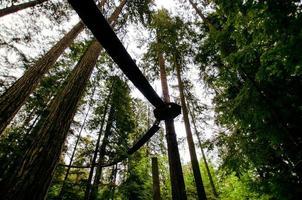 Ansicht der Holzbrücke im Wald foto