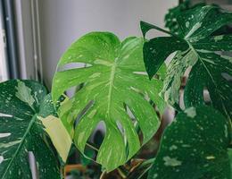 Nahaufnahme von Zimmerpflanzen foto