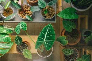 Draufsicht auf Zimmerpflanzen foto