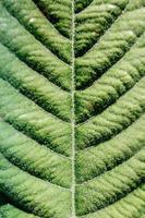 Muster einer großen Pflanze
