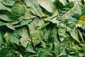 ein Haufen grüner Blätter