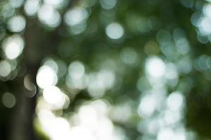 defokussierte grüne Blätter foto