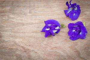 Schmetterlingserbse. foto
