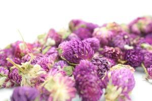 getrocknete Gomphrena-Blüten foto