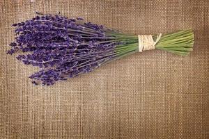Bündel getrockneter Lavendelblüten foto
