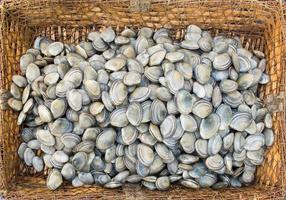 frische Muscheln in einem rustikalen Korb. foto