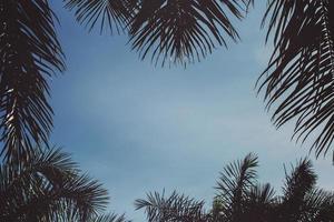Wurmansichtfoto von grünen Bäumen foto