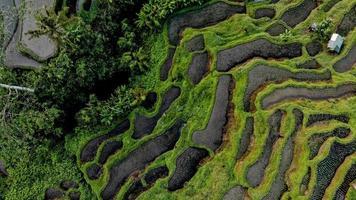 Luftaufnahme von bebauten Feldern foto