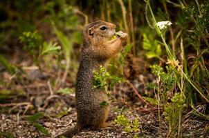 Eichhörnchen mit Blatt