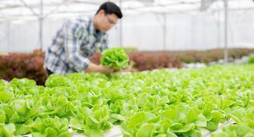 Fokus auf Gemüse mit unscharfem Hintergrund des Gärtners foto