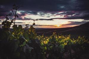 grüne Pflanzen während des Sonnenuntergangs foto