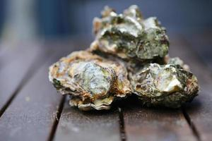 rohe Austern foto