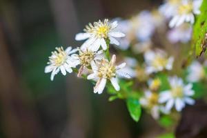 blumig aus grünen Blättern und weißen Blüten foto