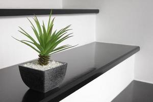 kleine grüne Pflanze für die Heimdekoration foto