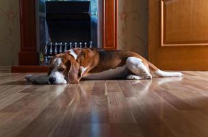 Hund in der Nähe eines Kamins foto
