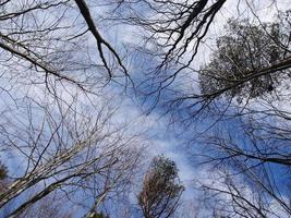 Herbstwald foto