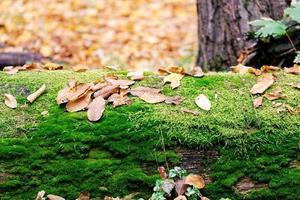getrocknete Blätter auf einem Baumstamm