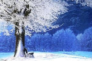 Bank unter gefrorenem Baum im Winter