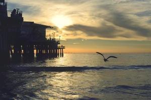 Silhouette des Vogelfliegens während des Sonnenuntergangs
