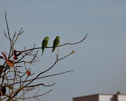 Vögel sitzen auf einem Ast foto