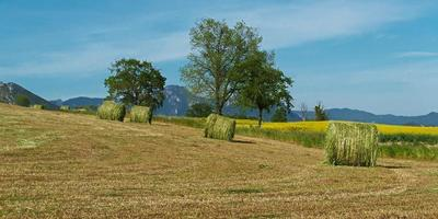 Feld und Bäume im Sommer