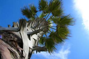 Flachwinkelansicht der Palme foto